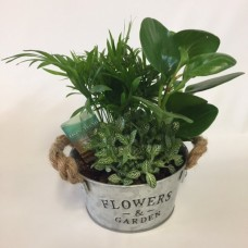 Living Trend Plant   ( Sorry, Out of Stock )